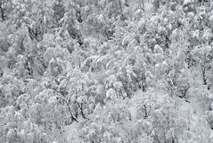 δασικός χειμώνας χιονιού Στοκ εικόνα με δικαίωμα ελεύθερης χρήσης