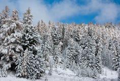 δασικός χειμώνας Στοκ φωτογραφίες με δικαίωμα ελεύθερης χρήσης