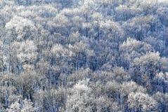 δασικός χειμώνας Στοκ Εικόνα