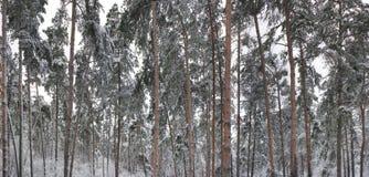 δασικός χειμώνας στοκ φωτογραφία
