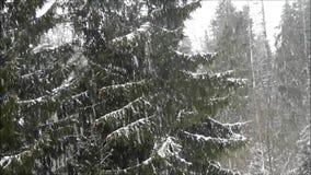 Δασικός χειμώνας απόθεμα βίντεο