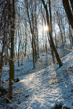 δασικός χειμώνας Στοκ Φωτογραφίες