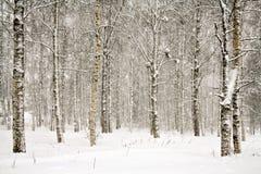 δασικός χιονώδης χειμερινός Στοκ Φωτογραφίες