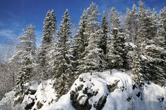 δασικός χιονώδης χειμώνας εποχής βουνών Στοκ Εικόνες
