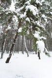 δασικός χιονώδης χειμώνα&sig Στοκ εικόνες με δικαίωμα ελεύθερης χρήσης