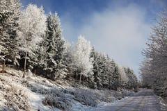 δασικός χιονώδης χειμώνα&sig Στοκ φωτογραφίες με δικαίωμα ελεύθερης χρήσης