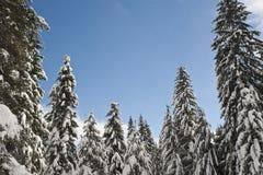 δασικός χιονώδης χειμώνα&sig Στοκ Φωτογραφία