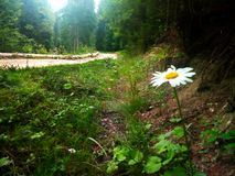 δασικός koh mak δρόμος Στοκ φωτογραφίες με δικαίωμα ελεύθερης χρήσης