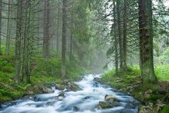δασικός misty ποταμός ροής Στοκ Φωτογραφία