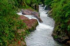 Δασικό άγριο τοπίο ποταμών στην περιοχή της Αμαζώνας, νερό ρευμάτων ορμητικά σημείων ποταμού Στοκ φωτογραφίες με δικαίωμα ελεύθερης χρήσης