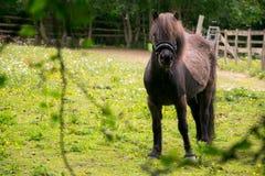 Δασικό άλογο Epping στοκ εικόνα με δικαίωμα ελεύθερης χρήσης