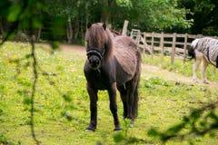 Δασικό άλογο Epping στοκ φωτογραφία