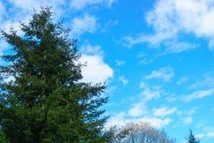 Δασικό δέντρο με τα συμπαθητικά σύννεφα Στοκ Φωτογραφίες