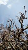 Δασικό δέντρο στοκ φωτογραφία με δικαίωμα ελεύθερης χρήσης