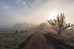 Δασικό ίχνος στο αγρόκτημα Trigorskoye που καλύπτεται με τον παγετό Στοκ Φωτογραφίες