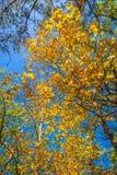 Δασικό ίχνος το φθινόπωρο Στοκ εικόνες με δικαίωμα ελεύθερης χρήσης