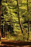 Δασικό ίχνος φθινοπώρου Στοκ Εικόνα
