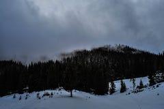 Δασικό βουνό με τα δέντρα και χιόνι επάνω από τις κλίσεις σκι Στοκ Εικόνες