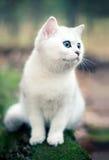 δασικό γατάκι Στοκ Εικόνες