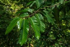 δασικό δάσος δέντρων χιονιού φύσης ανασκοπήσεων Πράσινες ξύλινες ανασκοπήσεις φωτός του ήλιου φύσης πράσινοι κλάδοι φύλλων σε ένα Στοκ Εικόνες