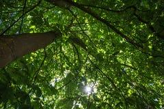 δασικό δάσος δέντρων χιονιού φύσης ανασκοπήσεων Πράσινες ξύλινες ανασκοπήσεις φωτός του ήλιου φύσης Στοκ Εικόνες