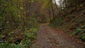 Δασικό δάσος φθινοπώρου στα βουνά κατακόρυφος ποταμών πανοράματος βουνών 3 εικόνων hdr Ρεύμα με το κρύο νερό φιλμ μικρού μήκους