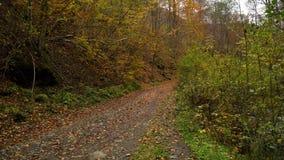 Δασικό δάσος φθινοπώρου στα βουνά κατακόρυφος ποταμών πανοράματος βουνών 3 εικόνων hdr Ρεύμα με το κρύο νερό απόθεμα βίντεο