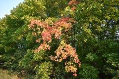 Δασικό δάσος φθινοπώρου φθινοπώρου τα χρώματα των δέντρων φθινοπώρου Στοκ Φωτογραφία