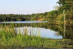 Δασικό δέντρο βουνών λιμνών νερού στοκ φωτογραφίες με δικαίωμα ελεύθερης χρήσης