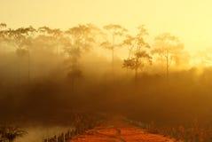 δασικό δέντρο πεύκων πρωιν&om Στοκ φωτογραφίες με δικαίωμα ελεύθερης χρήσης