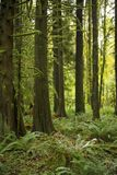 δασικό δέντρο στάσεων ανάπτ Στοκ φωτογραφία με δικαίωμα ελεύθερης χρήσης