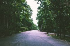 Δασικό δευτερεύον πάρκο οδικών τρόπων Στοκ Εικόνες