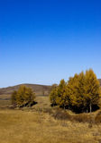 δασικό εθνικό saihanba πάρκων Στοκ φωτογραφίες με δικαίωμα ελεύθερης χρήσης