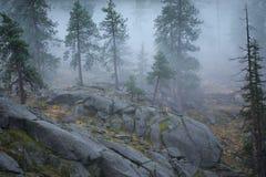 δασικό εθνικό wenatchee στοκ φωτογραφία με δικαίωμα ελεύθερης χρήσης