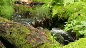 Δασικό ελατήριο, καθαρό νερό απόθεμα βίντεο