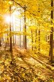 Δασικό εμπνευσμένο τοπίο φθινοπώρου, τοπίο πτώσης Στοκ εικόνες με δικαίωμα ελεύθερης χρήσης