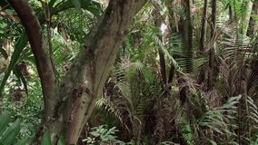 Δασικό ζουμ ζουγκλών απόθεμα βίντεο