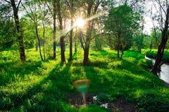 δασικό ηλιοβασίλεμα στοκ φωτογραφία