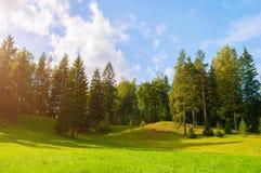 Δασικό θερινό τοπίο - πυκνά δασικά δέντρα στην κοιλάδα Στοκ εικόνες με δικαίωμα ελεύθερης χρήσης