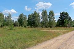 Δασικό θερινό τοπίο στο μεσημέρι Στοκ Εικόνες