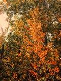Δασικό κίτρινο τοπίο φύλλων φθινοπώρου στοκ εικόνα