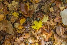 Δασικό κολάζ πατωμάτων των φύλλων φθινοπώρου Στοκ Εικόνες