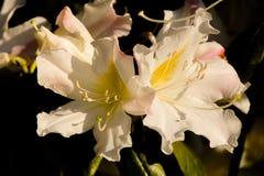 Δασικό λουλούδι στοκ εικόνες με δικαίωμα ελεύθερης χρήσης