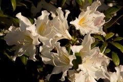 Δασικό λουλούδι στοκ εικόνα