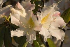 Δασικό λουλούδι στοκ φωτογραφία με δικαίωμα ελεύθερης χρήσης