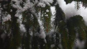 Δασικό μήκος σε πόδηα hd χιονιού δέντρων του FIR φιλμ μικρού μήκους