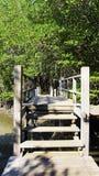 Δασικό μαγγρόβιο και η κατακόρυφος διάβασης πεζών γεφυρών Στοκ φωτογραφία με δικαίωμα ελεύθερης χρήσης