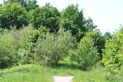 δασικό μονοπάτι ηλιόλου&sigm Στοκ φωτογραφία με δικαίωμα ελεύθερης χρήσης