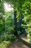 Δασικό μονοπάτι το καλοκαίρι Στοκ Φωτογραφίες
