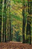 Δασικό μονοπάτι φθινοπώρου στο ολλανδικό πάρκο Veluwe Στοκ φωτογραφία με δικαίωμα ελεύθερης χρήσης
